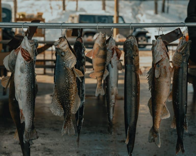 a hanging rack of fish drying
